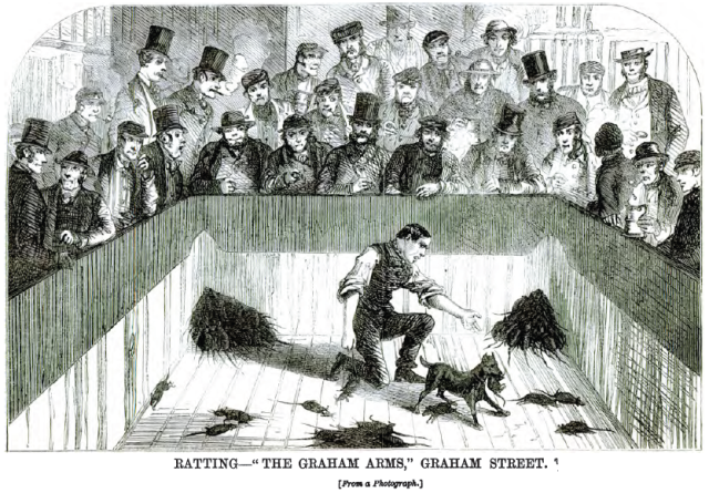 Rat-baiting_graham_street